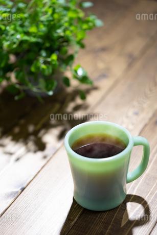 コーヒーと植物の写真素材 [FYI03405881]