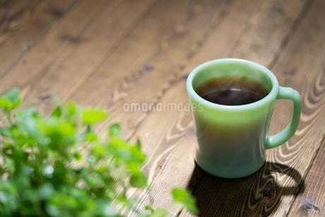 コーヒーと植物の写真素材 [FYI03405882]
