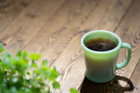 コーヒーと植物の写真素材 [FYI03405883]
