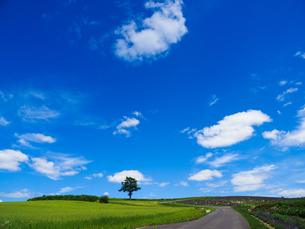 北海道の風景の写真素材 [FYI03406041]