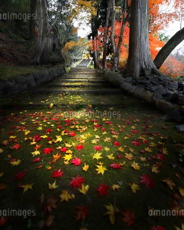 亀岡桜天満宮 日本 京都府 南丹市の写真素材 [FYI03406253]