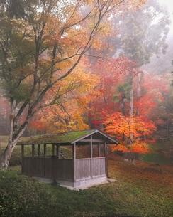 龍穏寺 日本 の写真素材 [FYI03406257]
