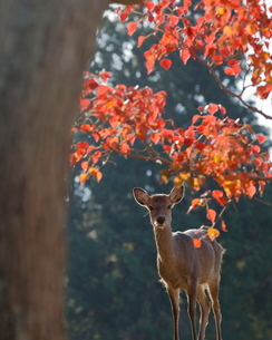 飛火野 日本 奈良県 奈良市の写真素材 [FYI03406258]