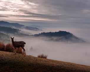若草山 日本 奈良県 奈良市の写真素材 [FYI03406261]