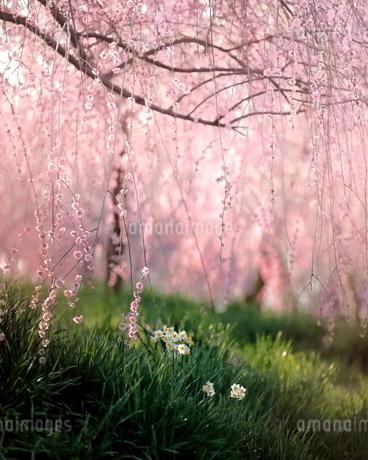 和泉リサイクル環境公園 日本 大阪府 和泉市の写真素材 [FYI03406280]
