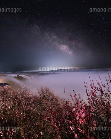 月ヶ瀬梅林 日本 奈良県 奈良市の写真素材 [FYI03406283]