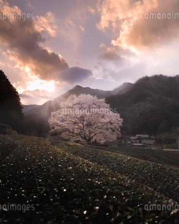 美杉町 日本 三重県 津市の写真素材 [FYI03406285]