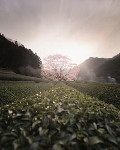 美杉町 日本 三重県 津市の写真素材 [FYI03406286]