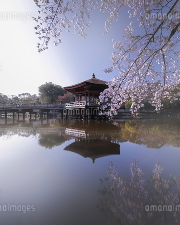 浮見堂 日本 奈良県 奈良市の写真素材 [FYI03406287]
