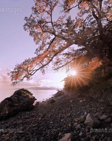 海津大崎の紅葉の写真素材 [FYI03406309]