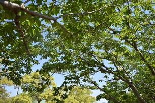 木の写真素材 [FYI03406346]