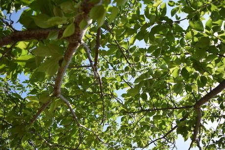 木の写真素材 [FYI03406347]