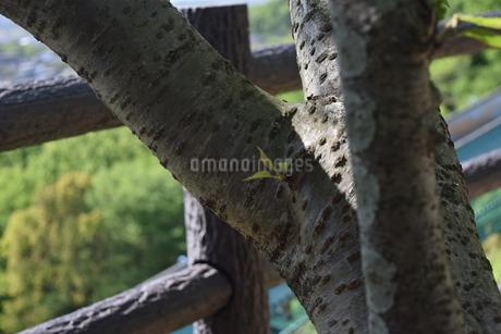 芽の写真素材 [FYI03406348]