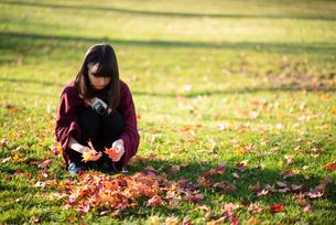 落ち葉を拾う女性の写真素材 [FYI03406665]