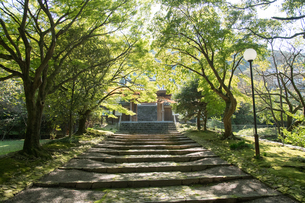瑞應寺(愛媛県 新居浜市) 参道の写真素材 [FYI03406758]