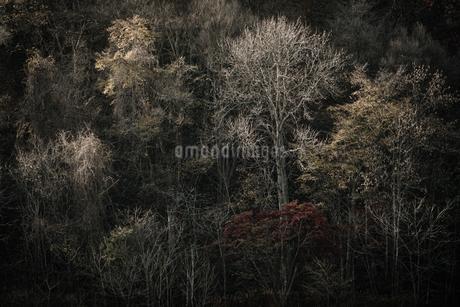 秋の森の写真素材 [FYI03407017]
