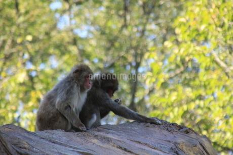 猿の写真素材 [FYI03407139]
