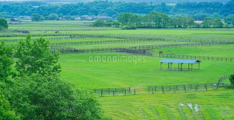 北海道 自然 風景 パノラマ 牧場朝景の写真素材 [FYI03407162]