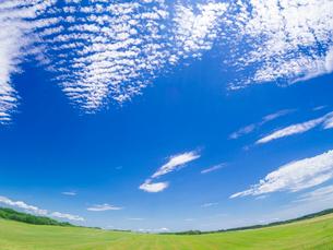 北海道 自然 風景 広大な牧草地と青空の写真素材 [FYI03407164]