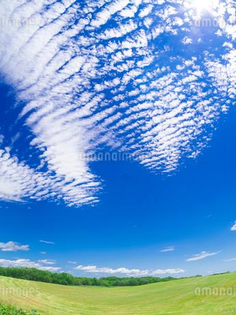 北海道 自然 風景 広大な牧草地と青空の写真素材 [FYI03407165]