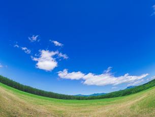 北海道 自然 風景 広大な牧草地と青空の写真素材 [FYI03407166]