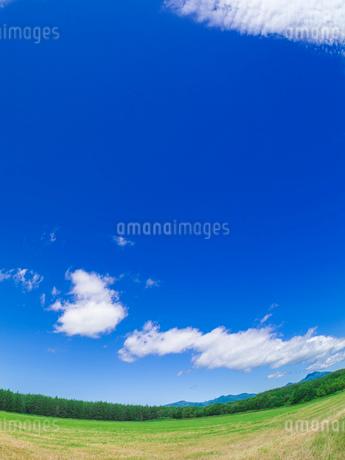 北海道 自然 風景 広大な牧草地と青空の写真素材 [FYI03407167]