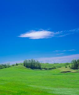 北海道 自然 風景 牧草地と青空の写真素材 [FYI03407169]