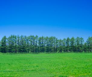 北海道 自然 風景 牧草地と青空の写真素材 [FYI03407172]