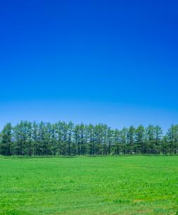 北海道 自然 風景 牧草地と青空の写真素材 [FYI03407173]