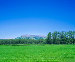 北海道 自然 風景 牧草地と青空の写真素材 [FYI03407174]