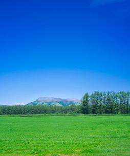 北海道 自然 風景 牧草地と青空の写真素材 [FYI03407175]