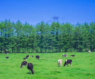 北海道 自然 風景 牧草地と青空の写真素材 [FYI03407176]