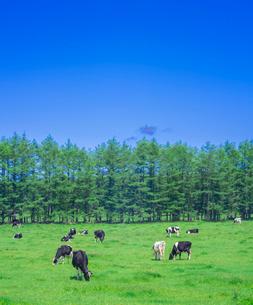 北海道 自然 風景 牧草地と青空の写真素材 [FYI03407177]