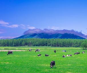 北海道 自然 風景 牧草地と青空の写真素材 [FYI03407178]
