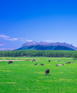 北海道 自然 風景 牧草地と青空の写真素材 [FYI03407179]