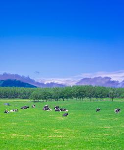北海道 自然 風景 牧草地と青空の写真素材 [FYI03407181]