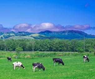 北海道 自然 風景 牧草地と青空の写真素材 [FYI03407182]
