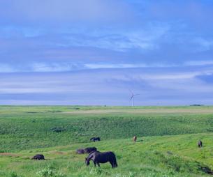 北海道 自然 風景 牧草地の写真素材 [FYI03407184]