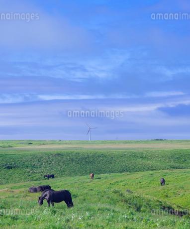 北海道 自然 風景 牧草地の写真素材 [FYI03407185]