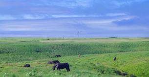 北海道 自然 風景 パノラマ 牧草地の写真素材 [FYI03407186]