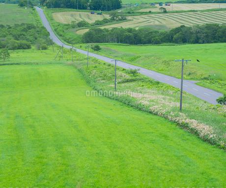 北海道 自然 風景 牧草地を走る一本道の写真素材 [FYI03407187]
