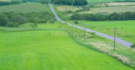 北海道 自然 風景 パノラマ 牧草地を走る一本道の写真素材 [FYI03407188]