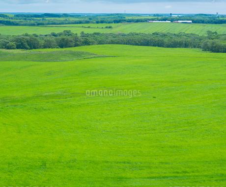 北海道 自然 風景 牧草地の写真素材 [FYI03407189]