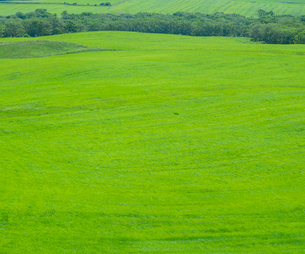 北海道 自然 風景 牧草地の写真素材 [FYI03407190]