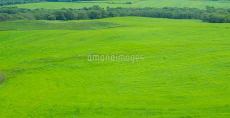 北海道 自然 風景 牧草地の写真素材 [FYI03407191]