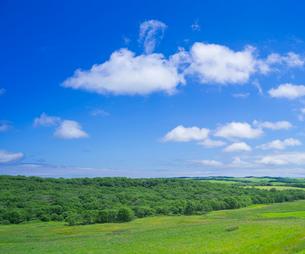 北海道 自然 風景 牧草地と青空の写真素材 [FYI03407192]