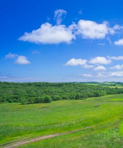 北海道 自然 風景 牧草地と青空の写真素材 [FYI03407193]