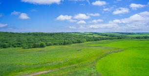 北海道 自然 風景 パノラマ 牧草地と青空の写真素材 [FYI03407195]