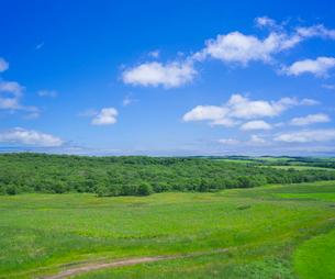 北海道 自然 風景 牧草地と青空の写真素材 [FYI03407197]