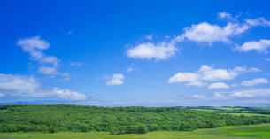 北海道 自然 風景 パノラマ 牧草地と青空の写真素材 [FYI03407198]